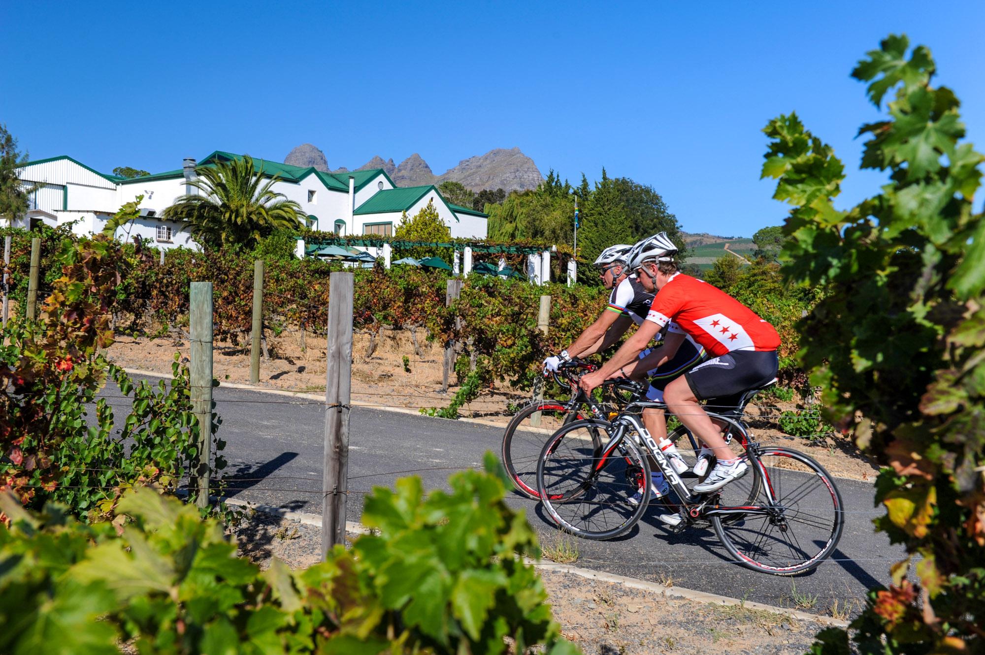 Ein Weingut in der Nähe von Stellenbosch